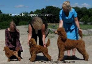www.bijoupoodles.com